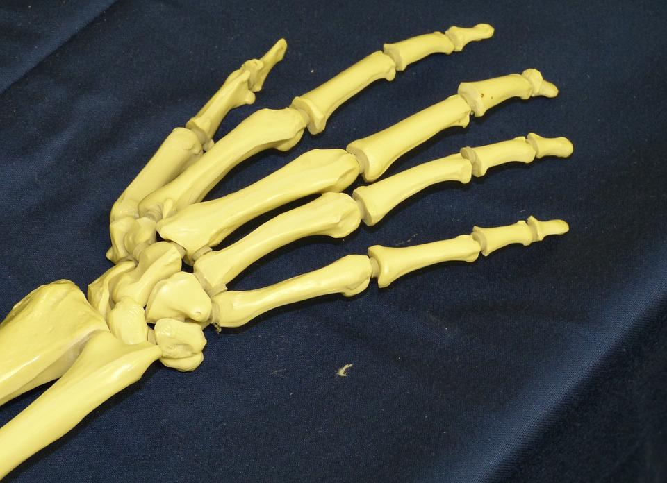 handgelenk-skelett